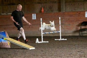 Barsony enjoying her new adventure, agility