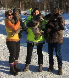 Catskill Pumi summit in Lora, Norway. Catskill Anka, with Ildiko Repasi, Catskill Cherry with Jacky Neeras and Erös with Berit Thyra Meland Pedersen.