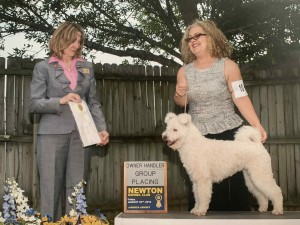 Hanga has earned her conformation Championship title with a BOB win! thank you judge Janin K. Lauring.
