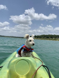 Happy dog on a kayak trip (one of our Pumis with his new owner) enjoying Kayaking in Texas. He has been introdudced to fun activites that helped him regaining his confidence.