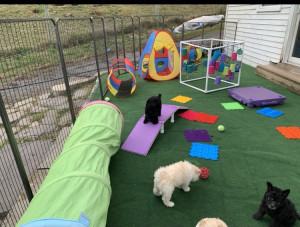 Age appropriate puppy training
