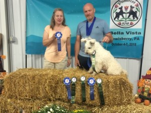 Barsony has Qd foursomes and placed first four times in Novice JWW and Novice Standard. Not bed for a dog entering first time in AKC agility