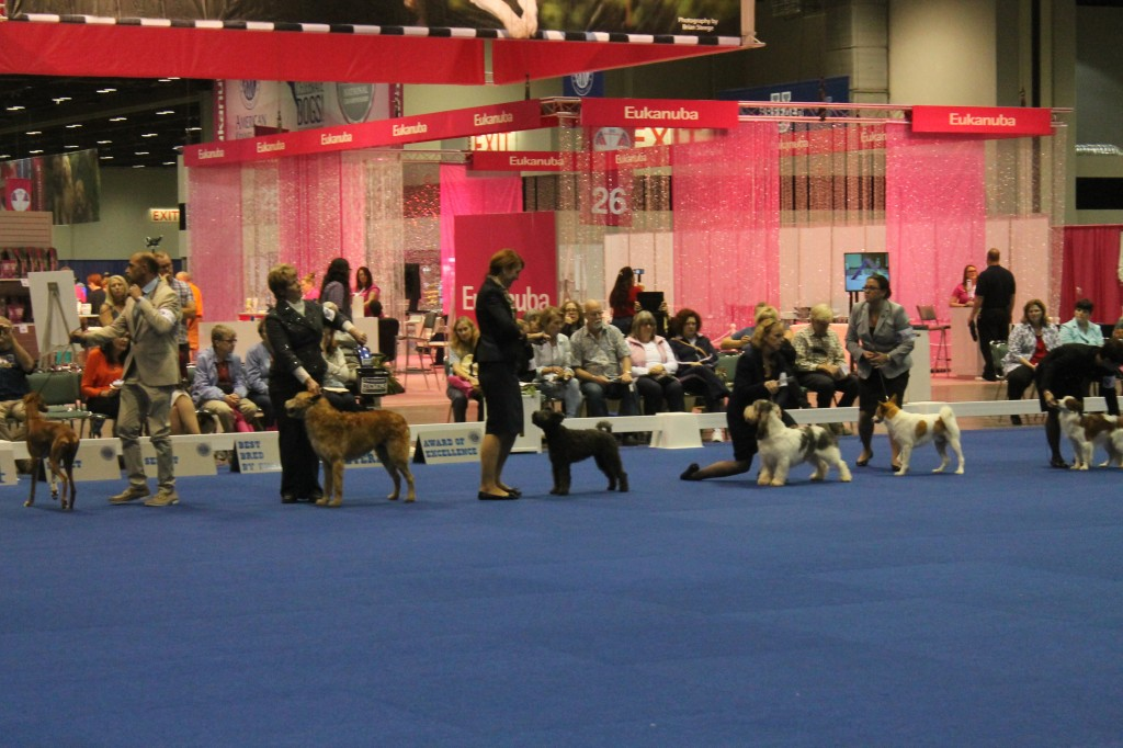 Standing tall... Aida Dungan and  in the Miscellaneous group during The Eukanuba National.