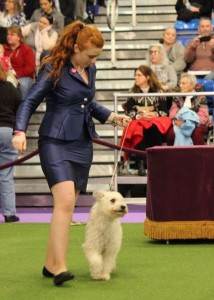Kaffogó Agyag and her handler Erin Glynn in the ring
