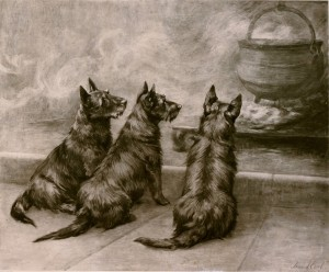terriers by Maude