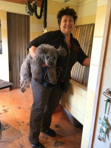 The good thing is as Tünde Balogh said, that when you get tired of your Pumi, you just just pick the dog up and carry her under your arm. like your fake Lois Voutton Cluny bag ..