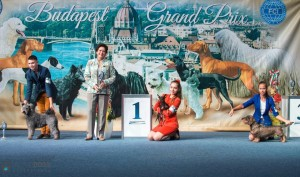 Anka and Marko second place at the Junior Handler show, Budapest Grand Prix