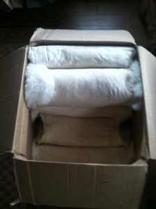 Santa dropped of the big Merino sheep skin box