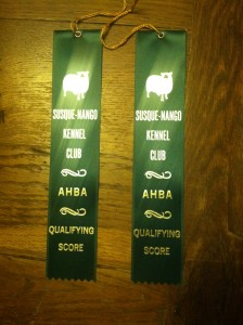 Both girls got their qualifying scores after impressive performances at the AHBA herding event in the Junior Herding Dog Competition...