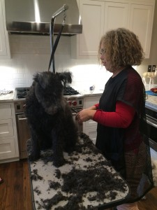 The Pumi Makeover...Asz watching his alterego on the grooming table