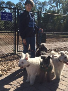 "After the Pumi survey the answer was anonymous. They are way bigger tan any dog and obviously over 30lbs, therefore eligible to enter the ""large dog"" dog park"