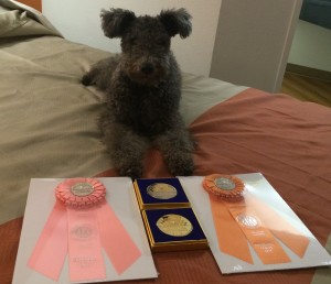 Anka with her Eukanuba National 2014 loot
