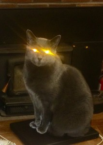 Koszos, my Electric Light Orchestra cat just lit up when he realized that the ten-day long missing Pumis are back in his life...