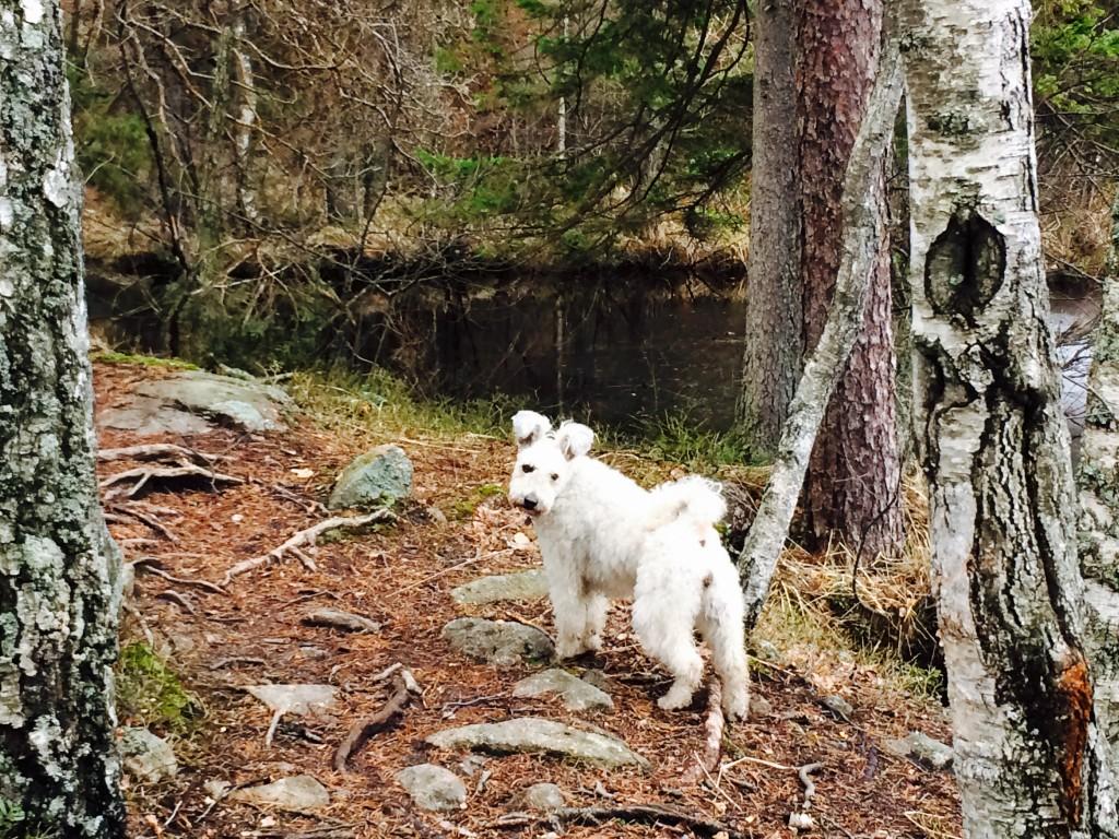 Agyag on the Trail of Tears (she trailed I teared)