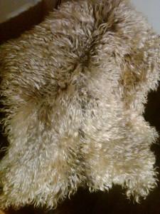 Angora goathides, white, silver average size approx. 2'x3' $185